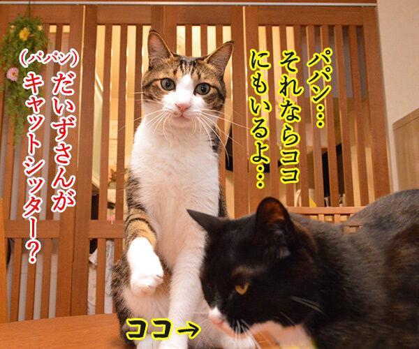 ペットシッターを頼もうかしら? 猫の写真で4コマ漫画 3コマ目ッ