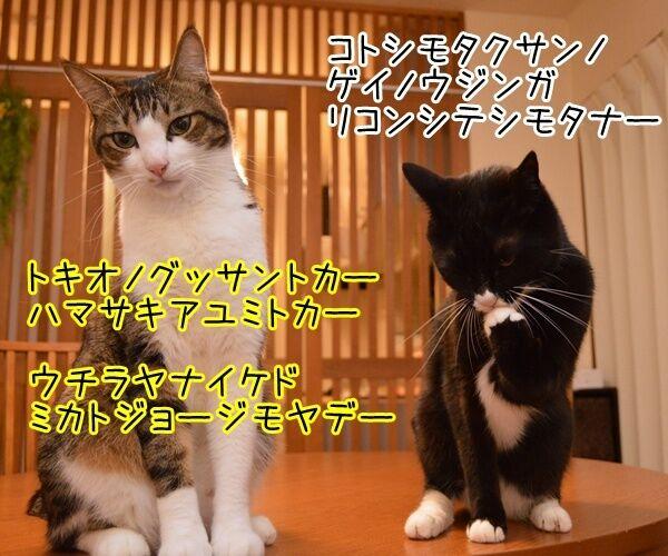 夫婦漫才 ミカとジョージ 其の八 猫の写真で4コマ漫画 2コマ目ッ