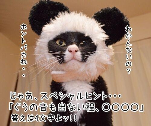 「ぐうかわ」ってどんな意味なの? 猫の写真で4コマ漫画 3コマ目ッ