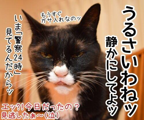 きょうは何の日? 猫の写真で4コマ漫画 4コマ目ッ