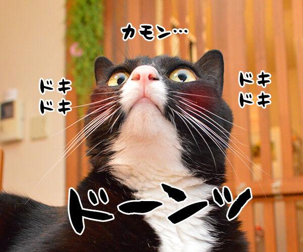 ねるとん 其の一 猫の写真で4コマ漫画 3コマ目ッ