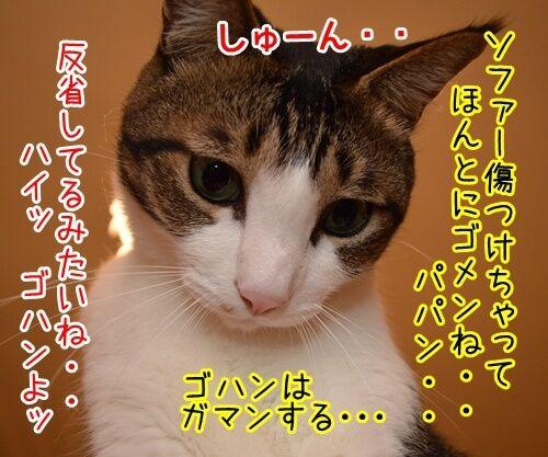 悪いコは… 猫の写真で4コマ漫画 3コマ目ッ