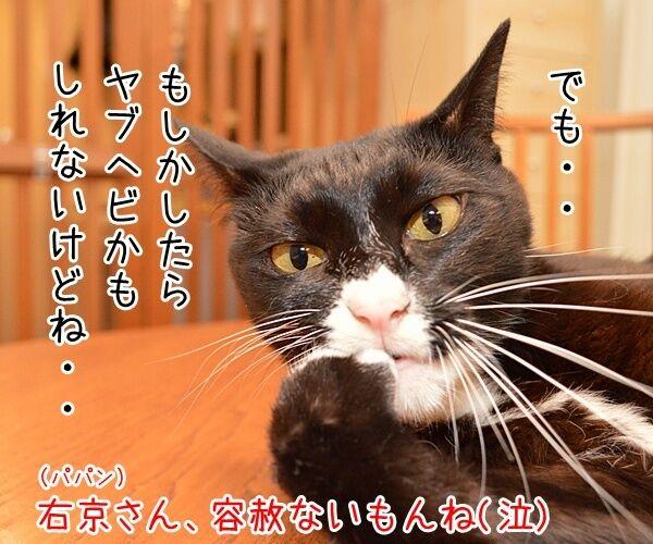 成宮くんが芸能界引退するんですってッ 猫の写真で4コマ漫画 4コマ目ッ
