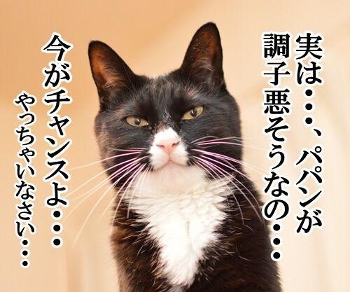 パパンが調子わるいとき 猫の写真で4コマ漫画 2コマ目ッ