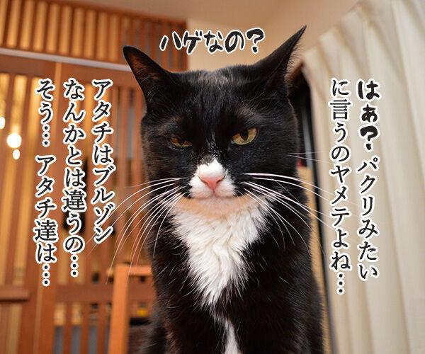 『ブルゾンちえみ』猫バージョン??? 猫の写真で4コマ漫画 3コマ目ッ