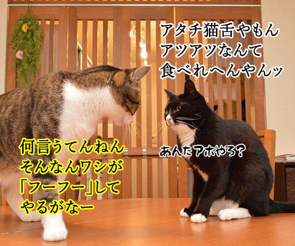 夫婦漫才 ミカとジョージ 其の三 猫の写真で4コマ漫画 3コマ目ッ