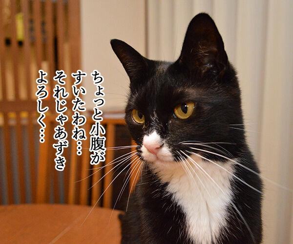 とりあえず 猫の写真で4コマ漫画 1コマ目ッ
