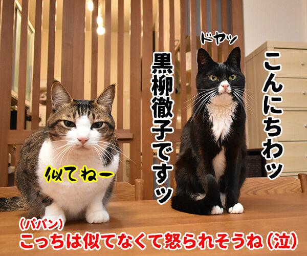 黒柳徹子の歌 猫の写真で4コマ漫画 4コマ目ッ
