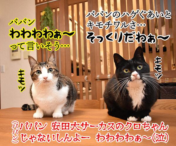 猫の名前ランキング大調査2019 結果発表! 猫の写真で4コマ漫画 4コマ目ッ