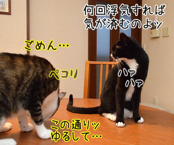アンタってひとは 猫の写真で4コマ漫画 2コマ目ッ