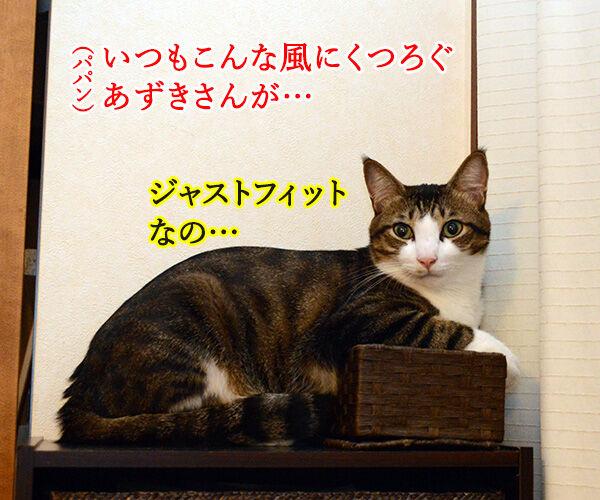 だいずさんだもの 猫の写真で4コマ漫画 1コマ目ッ