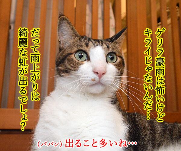 ゲリラ豪雨がやんだら? 猫の写真で4コマ漫画 2コマ目ッ