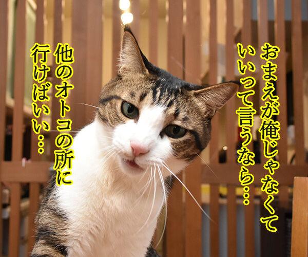 お前が俺しかいないって言うなら 猫の写真で4コマ漫画 1コマ目ッ