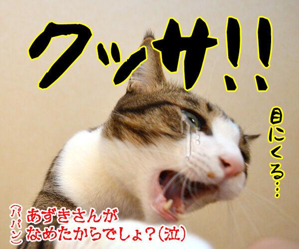 きょうは「ニオイの日」なんですってッ 猫の写真で4コマ漫画 4コマ目ッ