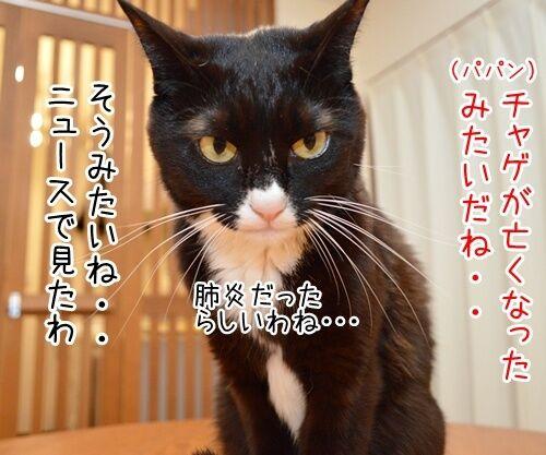 あのチャゲが…… 猫の写真で4コマ漫画 1コマ目ッ