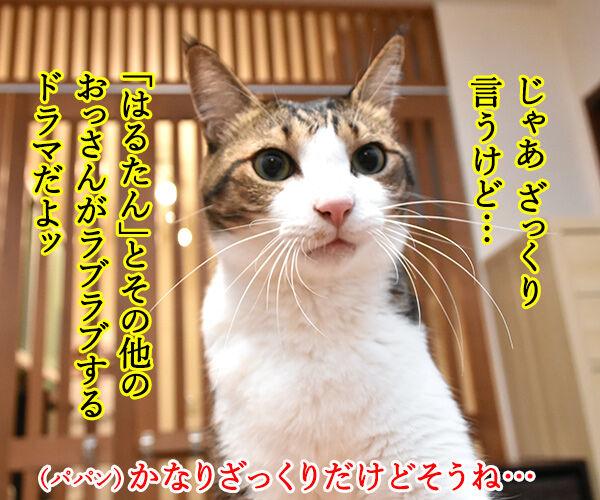 流行語大賞 ノミネート語 『おっさんずラブ』 猫の写真で4コマ漫画 2コマ目ッ