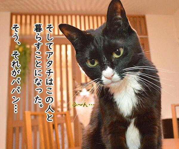 だいずさんとの出会い 猫の写真で4コマ漫画 3コマ目ッ