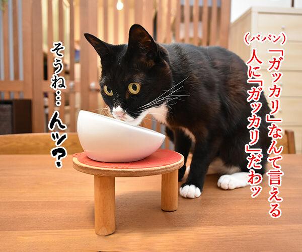 五輪相の『ガッカリ』発言に批判殺到なのッ 猫の写真で4コマ漫画 3コマ目ッ