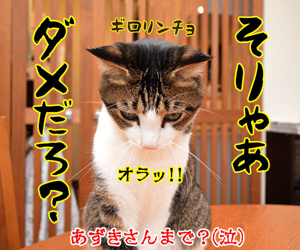 だいず女王様がお怒りですッ 猫の写真で4コマ漫画 4コマ目ッ