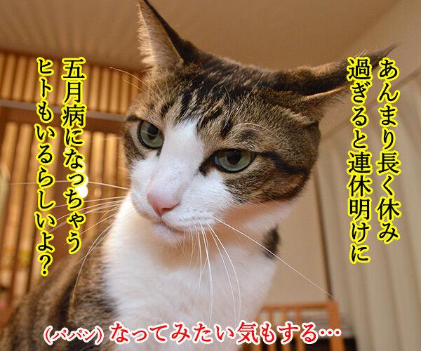 ゴールデンウィークはお仕事なの 猫の写真で4コマ漫画 2コマ目ッ