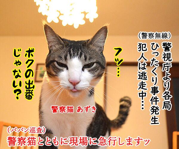 警察猫 あずき 猫の写真で4コマ漫画 1コマ目ッ