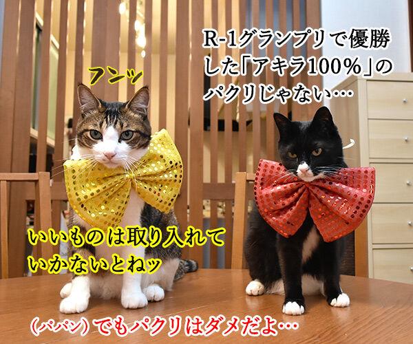 『R-1ぐらんぷり』に出たいのよッ 猫の写真で4コマ漫画 2コマ目ッ