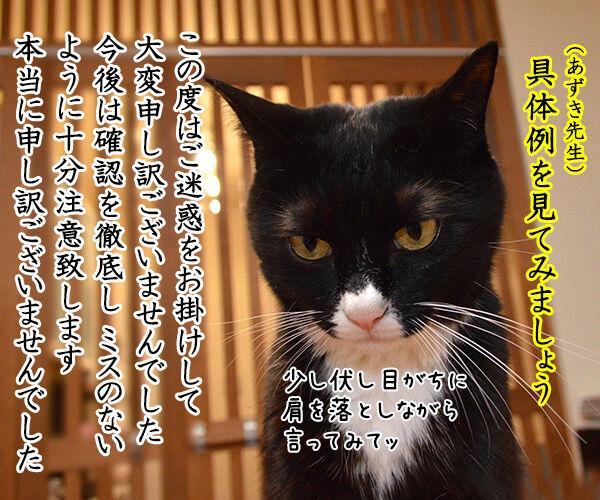 あずき先生のビジネスマナー講座「誠意が伝わる謝罪の仕方」 猫の写真で4コマ漫画 2コマ目ッ