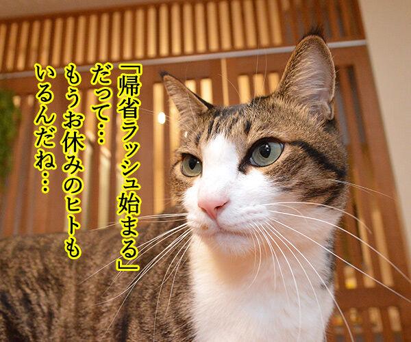 帰省ラッシュ始まるッ 猫の写真で4コマ漫画 1コマ目ッ