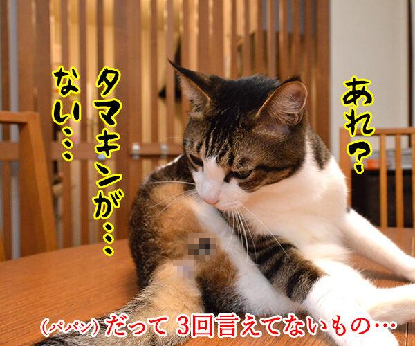 流れ星にお願いをしてみたのッ 猫の写真で4コマ漫画 3コマ目ッ