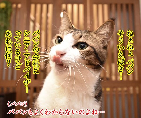 猫さんの7才以上はシニアなんですってッ 猫の写真で4コマ漫画 3コマ目ッ
