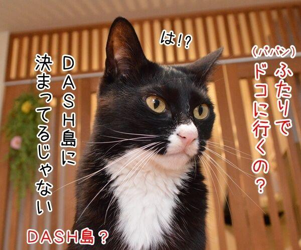 さあ、みんなで行きましょー♪ 猫の写真で4コマ漫画 3コマ目ッ