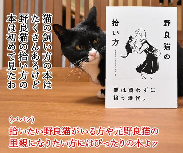 『野良猫の拾い方』って本を買ったのよッ 猫の写真で4コマ漫画 2コマ目ッ