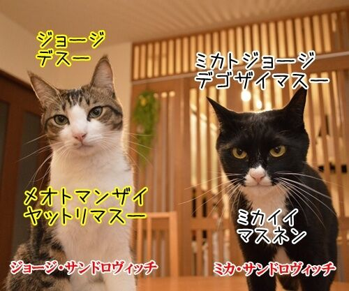 夫婦漫才 ミカとジョージ 其の二 猫の写真で4コマ漫画 1コマ目ッ
