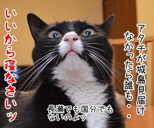 見届けなくちゃ 猫の写真で4コマ漫画 4コマ目ッ