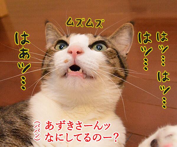 くしゃみが出そう 猫の写真で4コマ漫画 3コマ目ッ