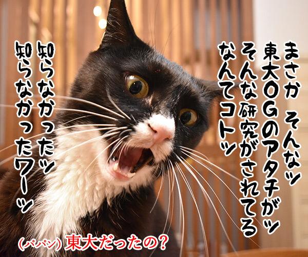 東大教授が腎臓病に効く薬を開発してるんですってッ 猫の写真で4コマ漫画 3コマ目ッ