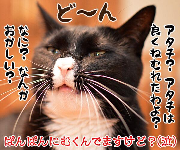 お水を飲みすぎちゃうと… 猫の写真で4コマ漫画 4コマ目ッ