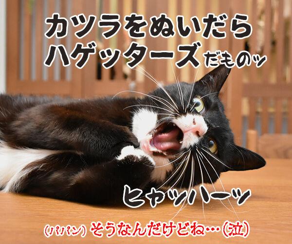 おなかがすいたらスニッカーズよねッ 猫の写真で4コマ漫画 4コマ目ッ