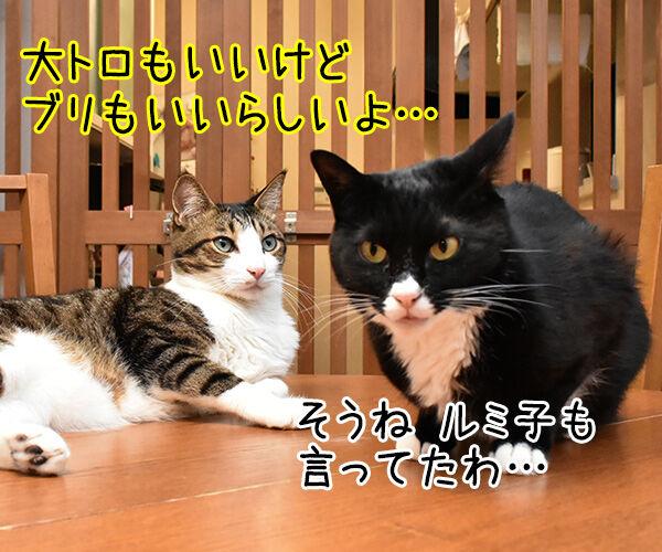 パパン なんだかお寿司が食べたいわぁ~ 猫の写真で4コマ漫画 3コマ目ッ