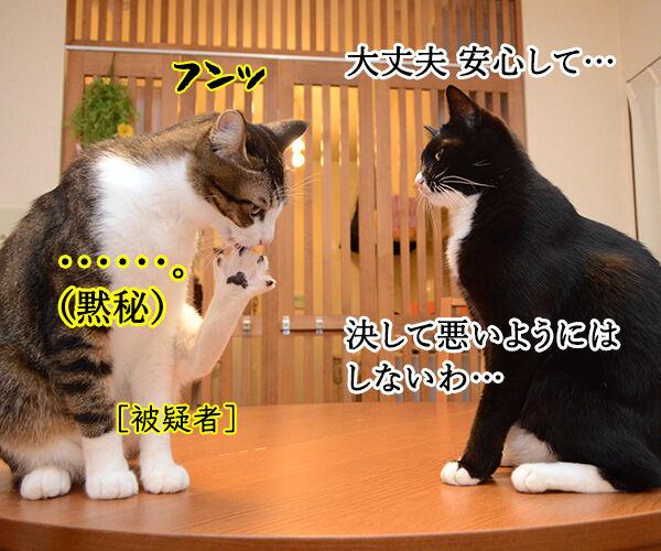緊急取調室 猫の写真で4コマ漫画 3コマ目ッ