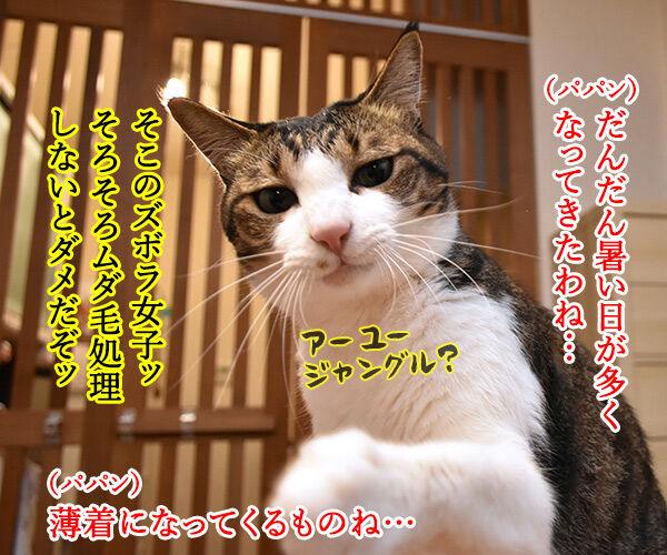 猫のエステサロンはないのかしら? 猫の写真で4コマ漫画 1コマ目ッ