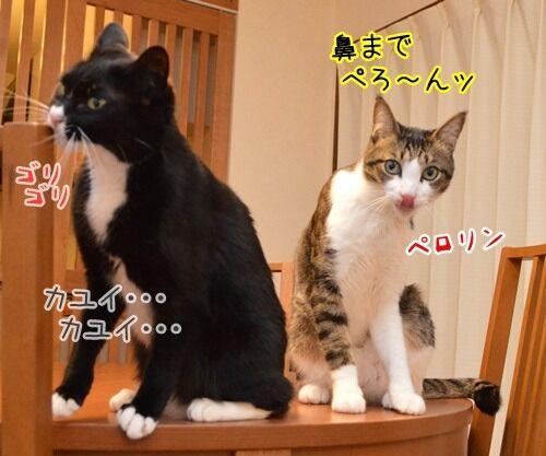 彼の名は… 猫の写真で4コマ漫画 3コマ目ッ