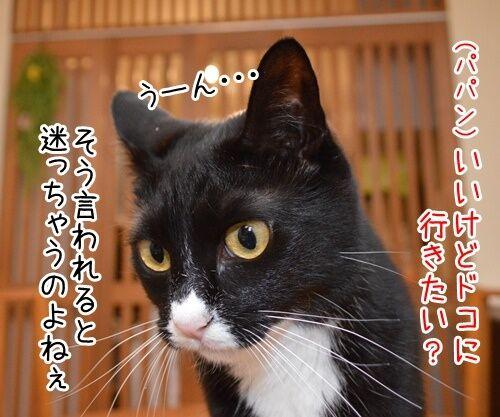 夏休みだから 猫の写真で4コマ漫画 2コマ目ッ