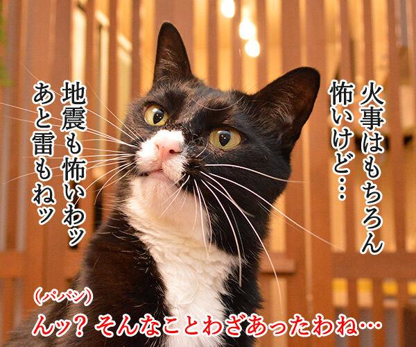 地震 雷 火事 親父 猫の写真で4コマ漫画 2コマ目ッ