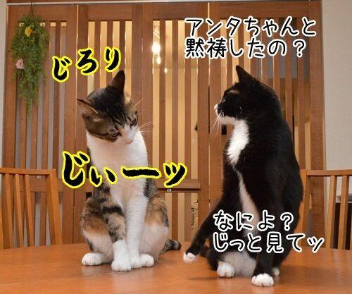 たま駅長のご冥福をお祈りして 猫の写真で4コマ漫画 2コマ目ッ