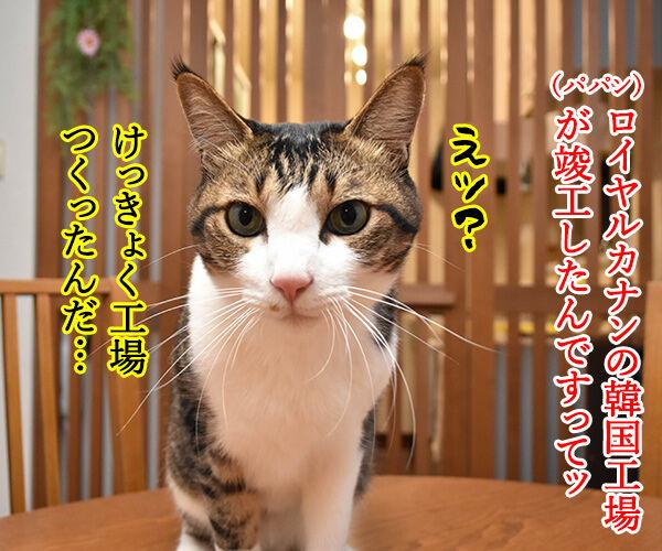 ロイヤルカナンの韓国工場が竣工したんですってッ 猫の写真で4コマ漫画 1コマ目ッ