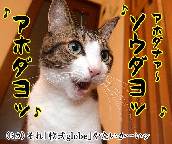 夫婦漫才 ミカとジョージ 其の五 猫の写真で4コマ漫画 4コマ目ッ