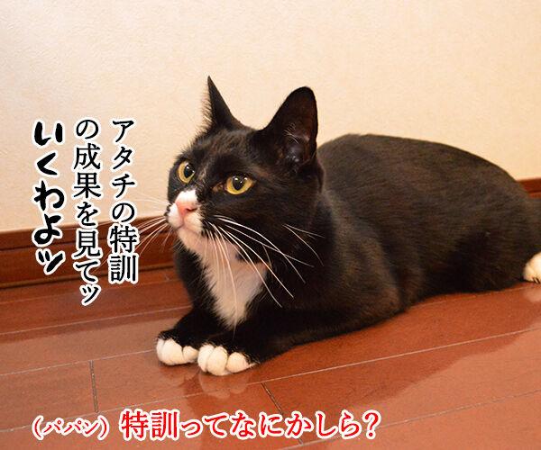 アタチ 特訓したのッ 猫の写真で4コマ漫画 1コマ目ッ