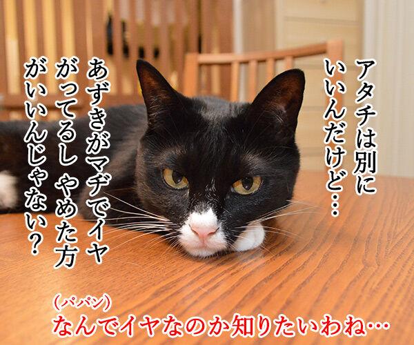 あなたが留守の時 ペットは何してる? 猫の写真で4コマ漫画 3コマ目ッ