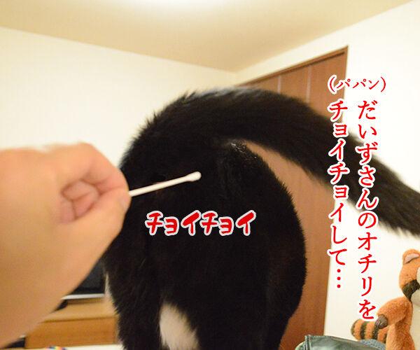 ちょっと実験してみたの 猫の写真で4コマ漫画 1コマ目ッ